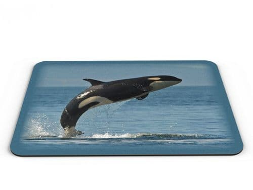 Killer Whale Computer PC Mousemat