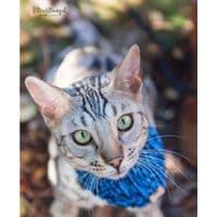 Knitted Wool Cat and Dog Bandana
